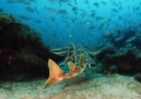 ccc-slider-tiburon