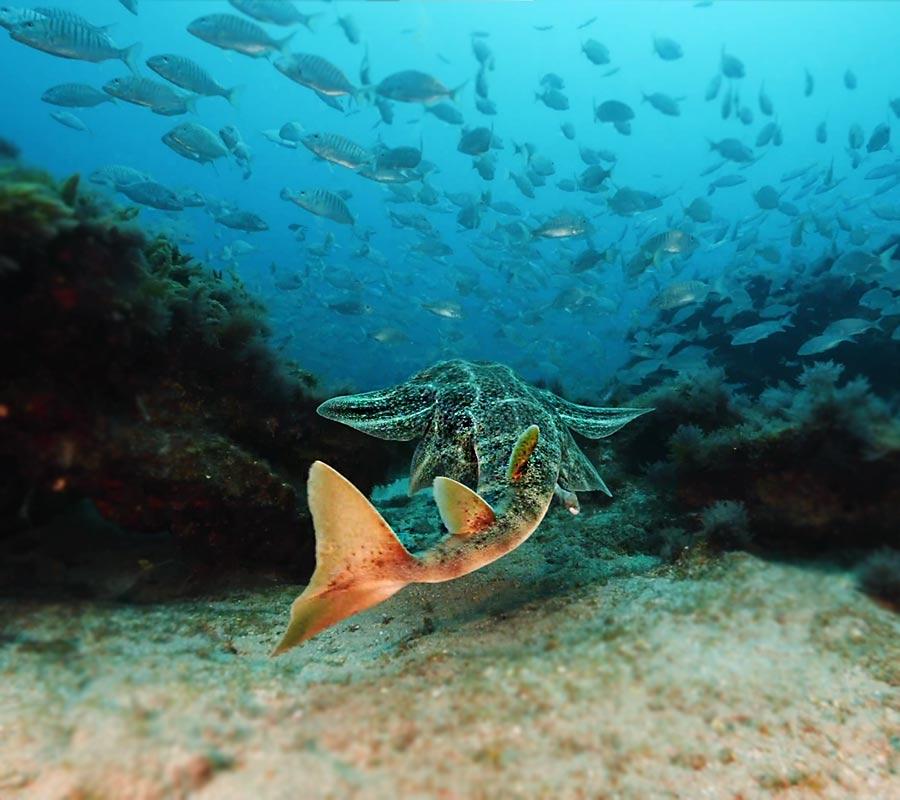 Compañía Cervecera lanza una campaña para preservar la riqueza marina de las islas